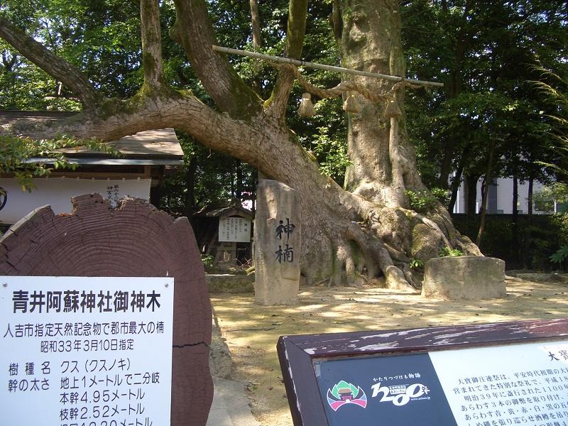 20140523青井神社御神木